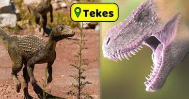 Dinozorlar Tek-eş'li çıktı. sözde bilim sozdebilim.com ilk dinozor Dinozorlar Tekeşli dinozorlar-tekesli